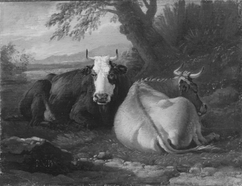 Two Cows Resting