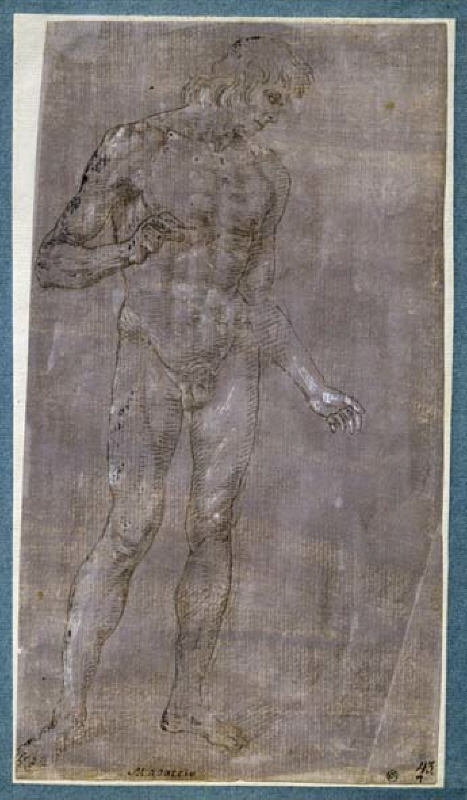 Standing male nude turned to the right