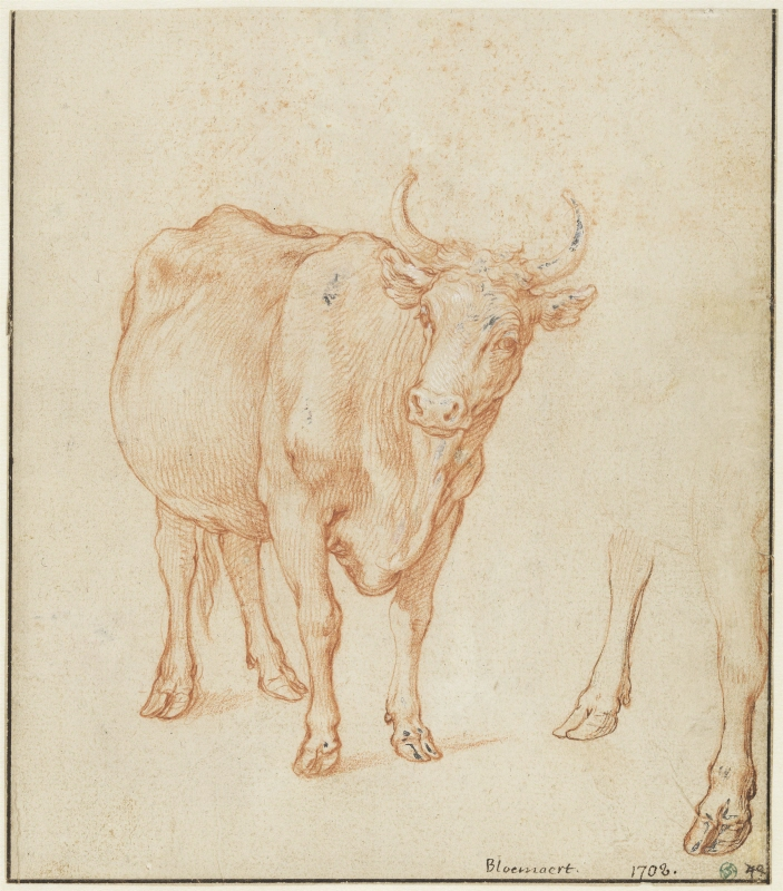 Studies of a cow