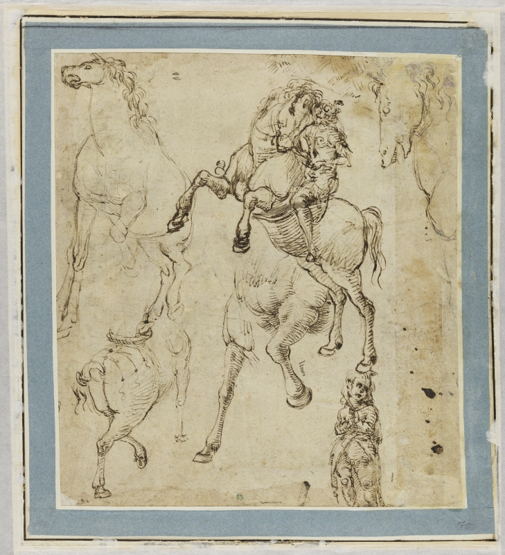 Young man on a rearing horse and further horse studies